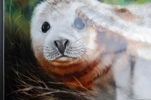 A Baby Seal painted with Filipe