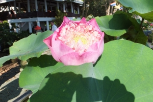 A Thai Garden